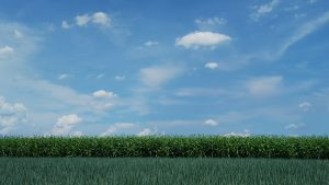 畑から望む夏の青空