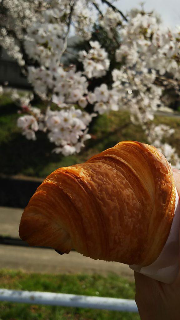 桜を見ながらクロワッサンを頬張る