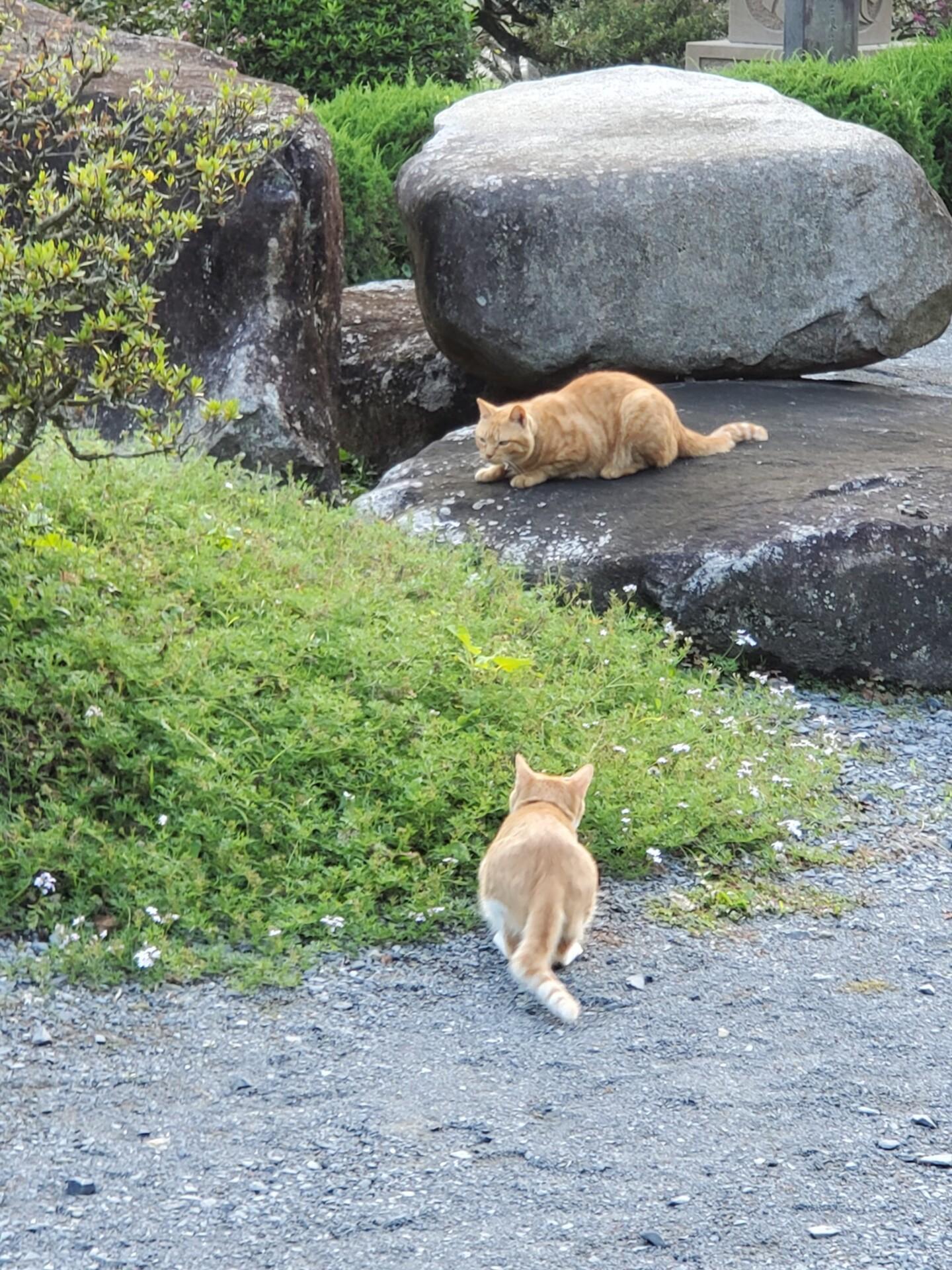 境内でじゃれる二匹の猫