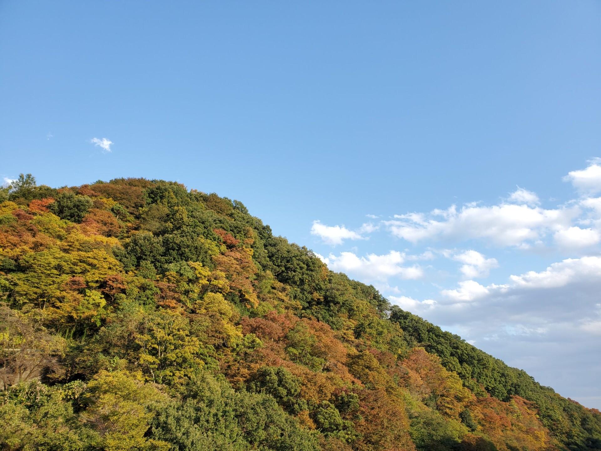 高津戸峡の色づき始めた要害山