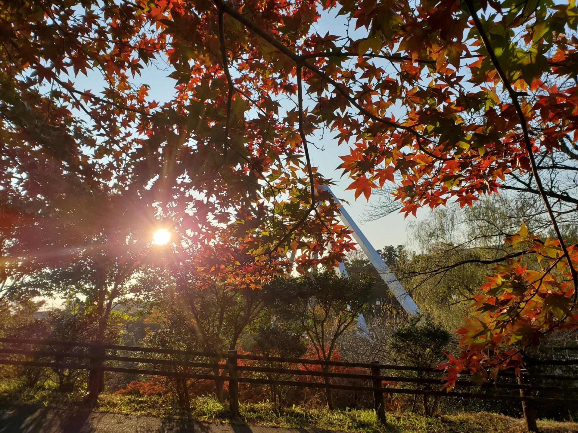 紅葉とはねたき橋