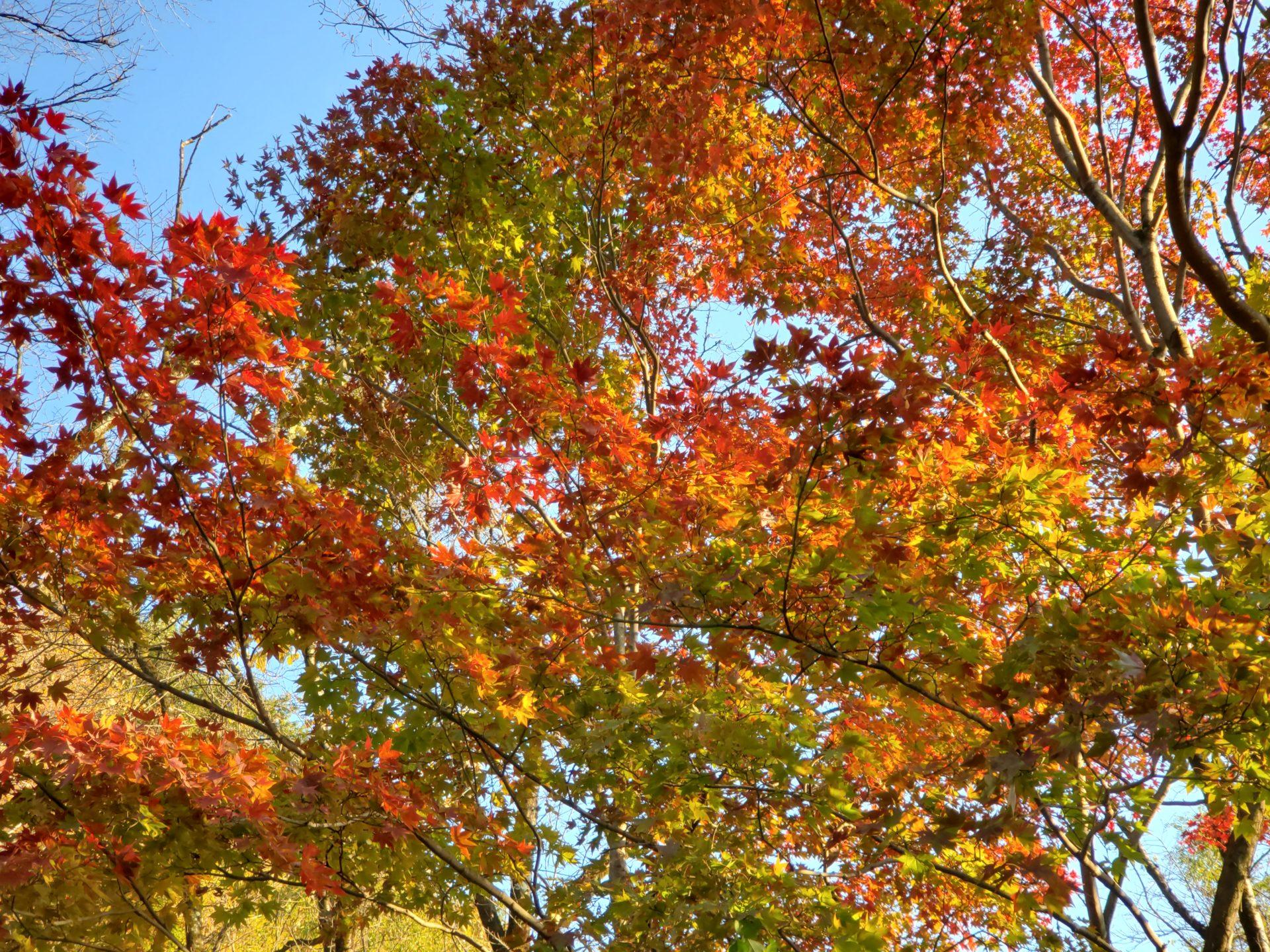高津戸峡の紅葉
