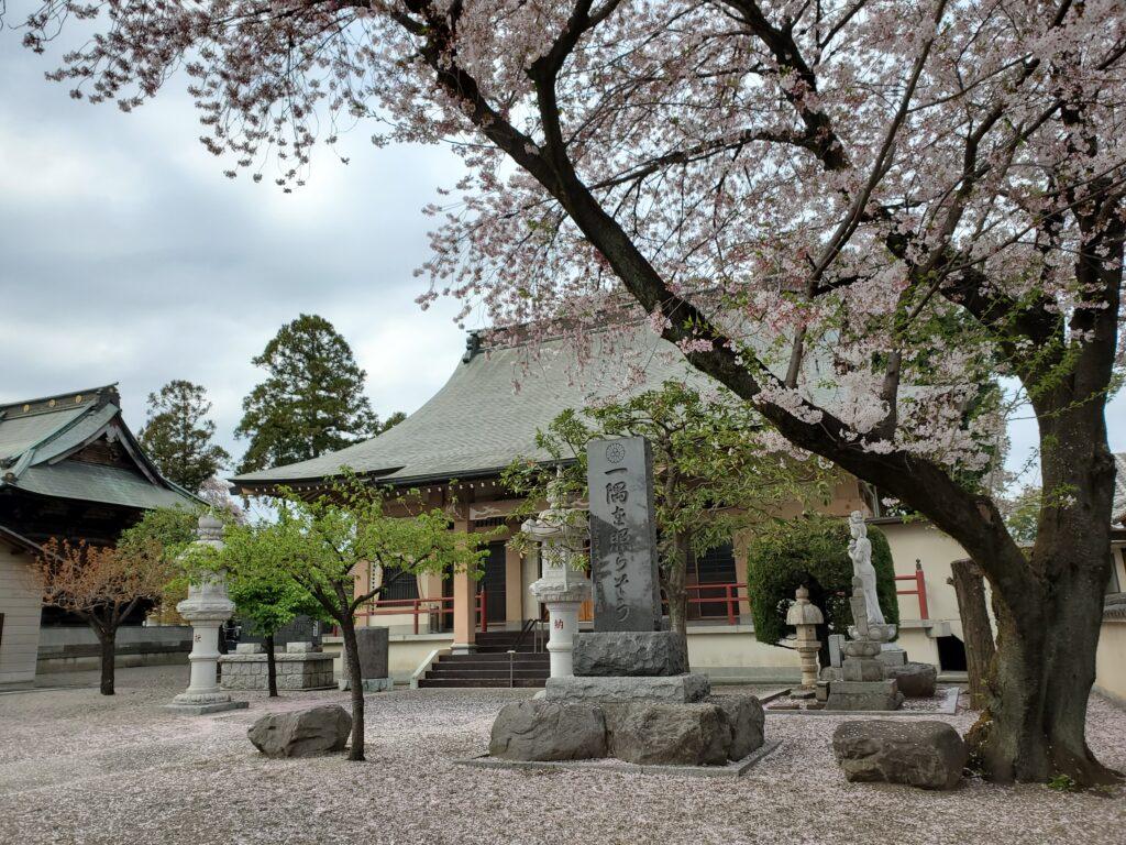 妙見寺本堂と桜