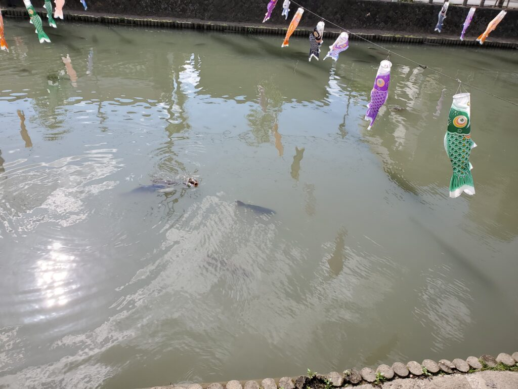川にかかる鯉のぼり